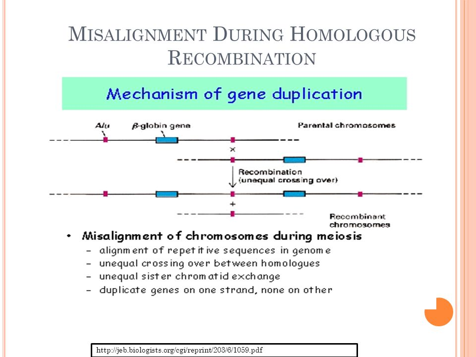 R ETROTRANSPOSON Transposons  mobile DNA Sequences of DNA that are capable of moving to alternative positions along the genome of a single cell jumping genes Retrotransposition  type of transposon able to become amplified within a genome Relatively stable and tend to withstand natural selection Thus, prevalent across generations