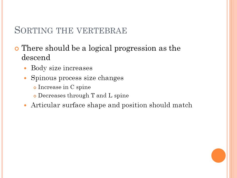 S ORTING THE VERTEBRAE There should be a logical progression as the descend Body size increases Spinous process size changes Increase in C spine Decreases through T and L spine Articular surface shape and position should match