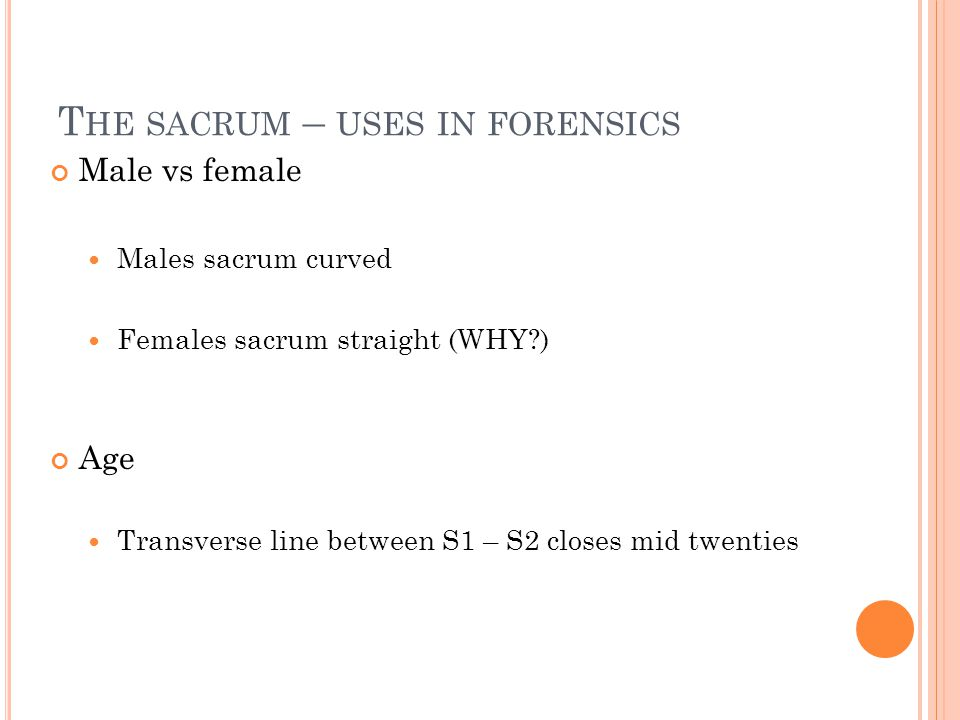 T HE SACRUM – USES IN FORENSICS Male vs female Males sacrum curved Females sacrum straight (WHY?) Age Transverse line between S1 – S2 closes mid twenties
