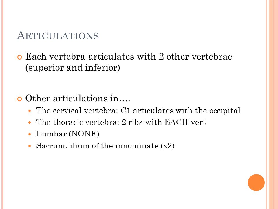 A RTICULATIONS Each vertebra articulates with 2 other vertebrae (superior and inferior) Other articulations in….