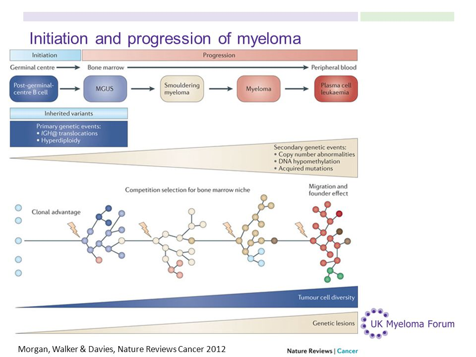 Initiation and progression of myeloma Morgan, Walker & Davies, Nature Reviews Cancer 2012