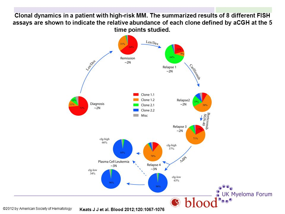 Clonal dynamics in a patient with high-risk MM. The summarized results of 8 different FISH assays are shown to indicate the relative abundance of each