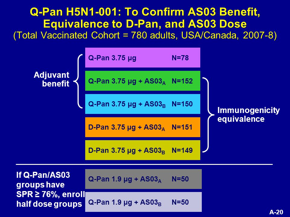 A-20 Q-Pan H5N1-001: To Confirm AS03 Benefit, Equivalence to D-Pan, and AS03 Dose (Total Vaccinated Cohort = 780 adults, USA/Canada, 2007-8) Q-Pan 3.75 µgN=78 Q-Pan 3.75 µg + AS03 A N=152 Q-Pan 3.75 µg + AS03 B N=150 D-Pan 3.75 µg + AS03 A N=151 D-Pan 3.75 µg + AS03 B N=149 Q-Pan 1.9 µg + AS03 A N=50 Q-Pan 1.9 µg + AS03 B N=50 Adjuvant benefit Immunogenicity equivalence If Q-Pan/AS03 groups have SPR ≥ 76%, enroll half dose groups