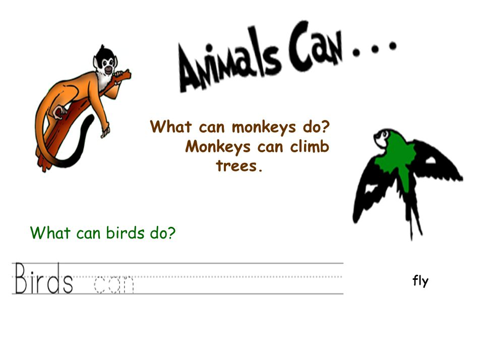 What can monkeys do Monkeys can climb trees. fly What can birds do