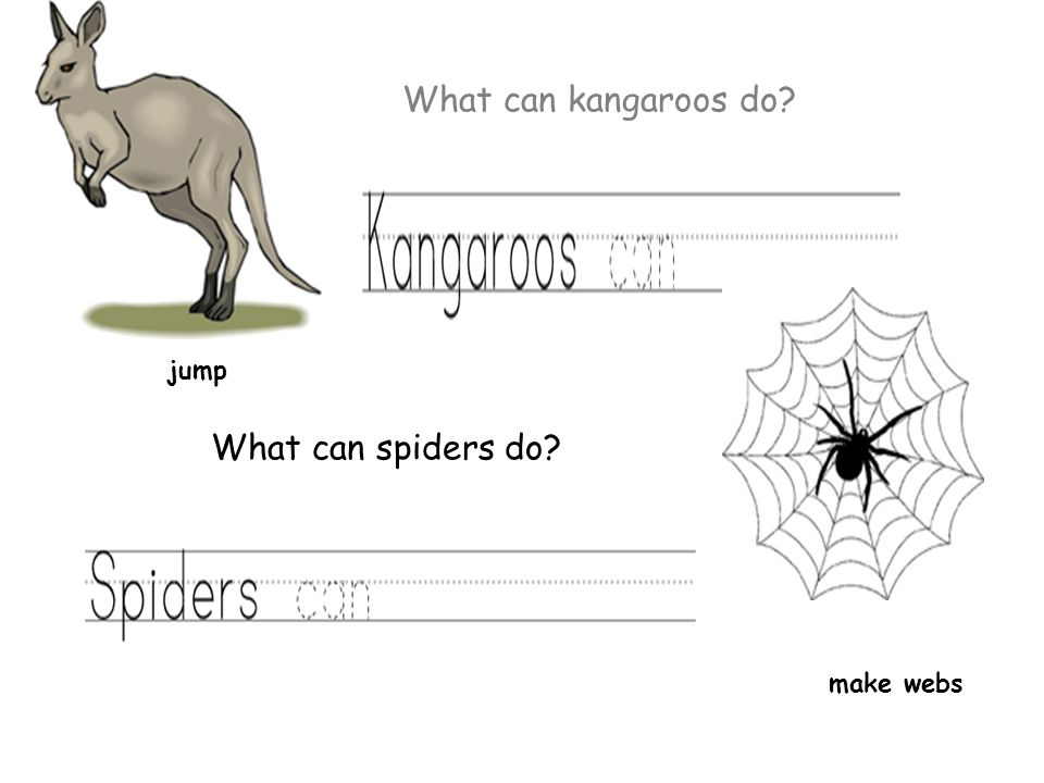 What can kangaroos do jump make webs What can spiders do