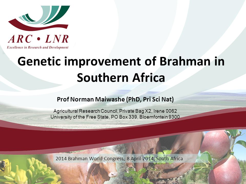 Genetic improvement of Brahman in Southern Africa Prof Norman Maiwashe (PhD, Pri Sci Nat) Agricultural Research Council, Private Bag X2, Irene 0062 University of the Free State, PO Box 339, Bloemfontein 9300 2014 Brahman World Congress, 8 April 2014, South Africa