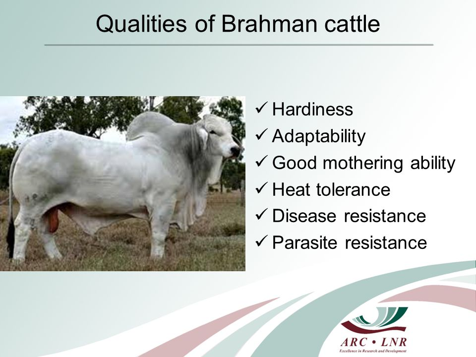 Collaboration between ARC and SA Brahman 1.Collection of feed intake data through central test centers 2.Ultrasound scanning of animals
