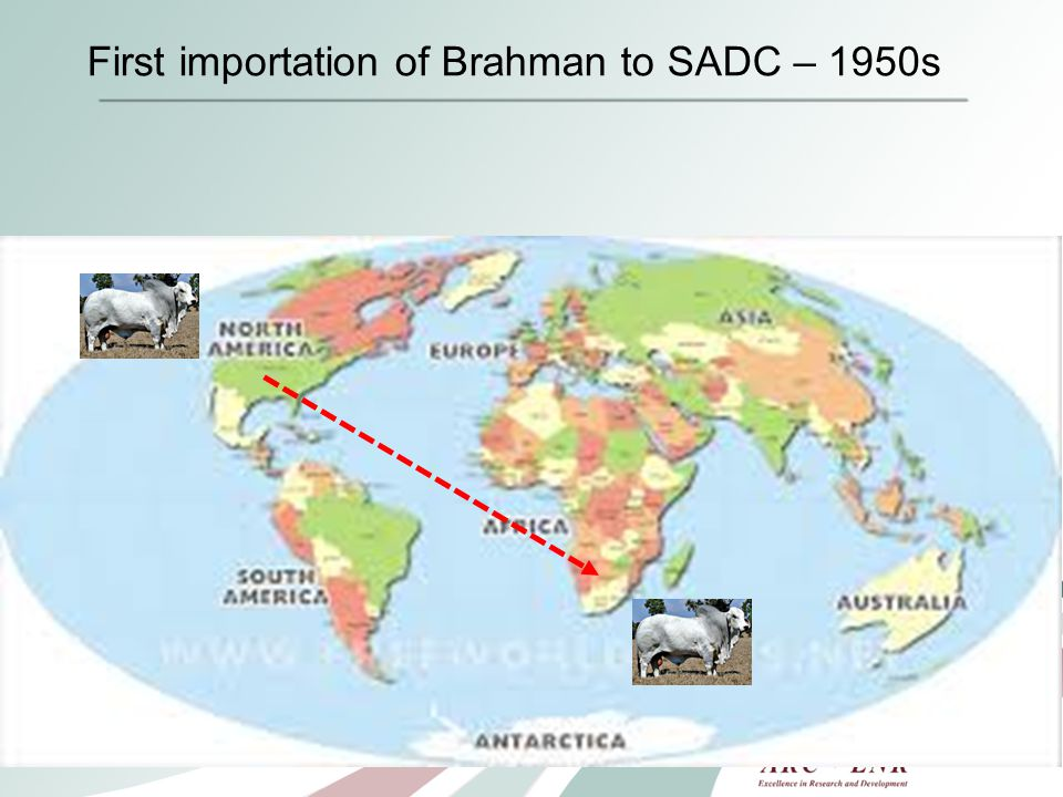 First importation of Brahman to SADC – 1950s