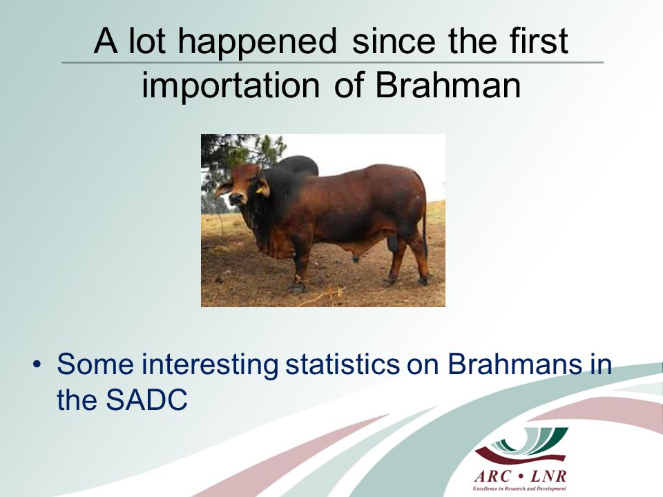 Brahman is one of the most popular breeds in SADC South African figures
