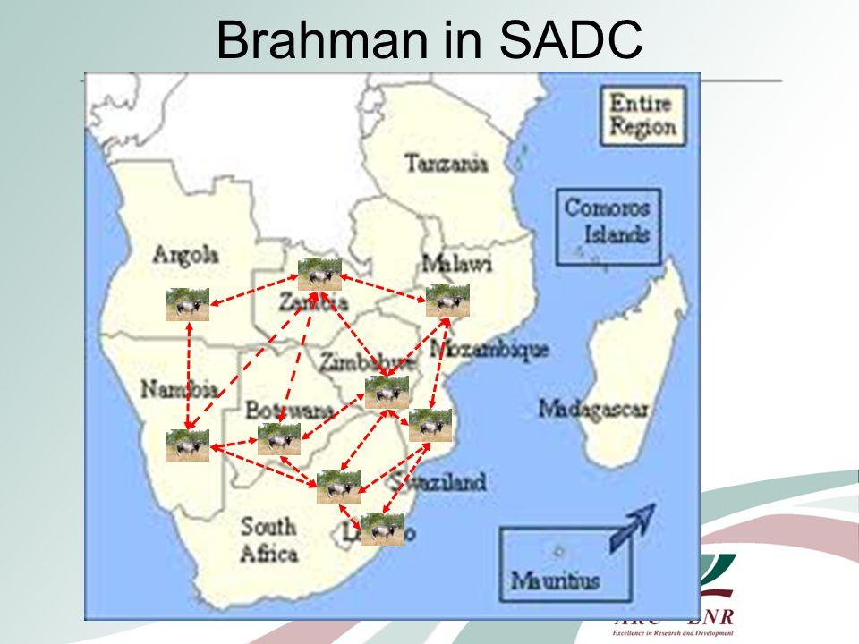 Few countries in SADC have formal Brahman Breeders Societies