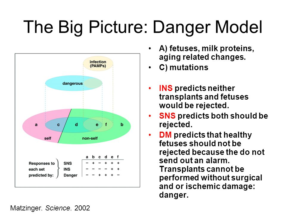 The Big Picture: Danger Model A) fetuses, milk proteins, aging related changes.