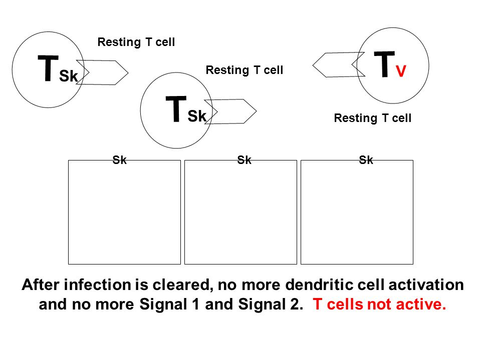After infection is cleared, no more dendritic cell activation and no more Signal 1 and Signal 2.