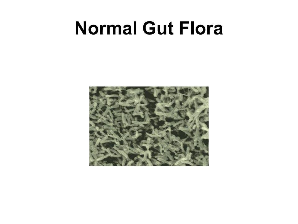 Normal Gut Flora