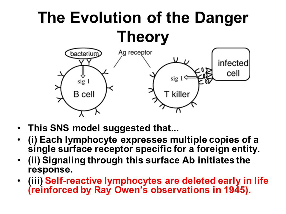 The Evolution of the Danger Theory SUMMARY-The antigen is in control (Burnet): recognition of antigen (Signal 1) leads to B- and T-cell activation.