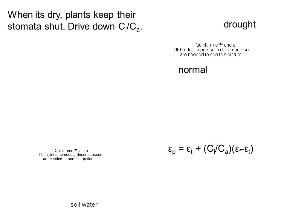 soil water drought normal ε p = ε t + (C i /C a )(ε f -ε t ) When its dry, plants keep their stomata shut.