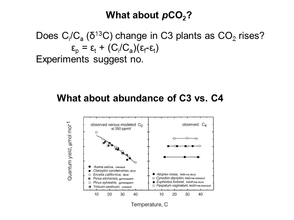 What about pCO 2 . Does C i /C a (δ 13 C) change in C3 plants as CO 2 rises.