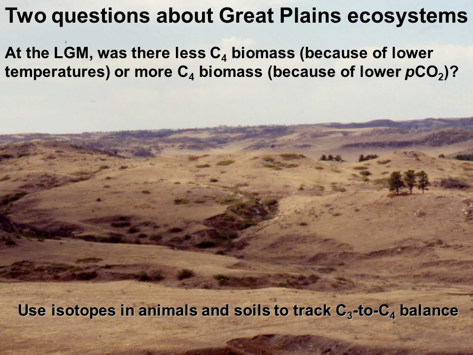Two questions about Great Plains ecosystems At the LGM, was there less C 4 biomass (because of lower temperatures) or more C 4 biomass (because of lower pCO 2 ).
