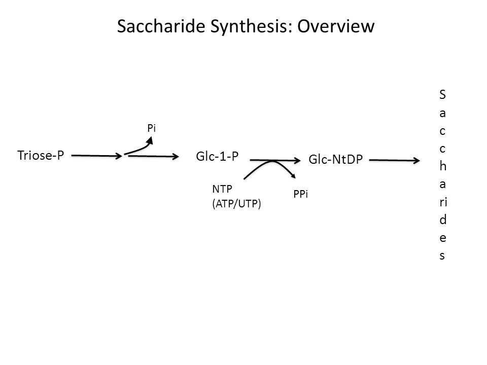 Plastids: Starch Synthesis