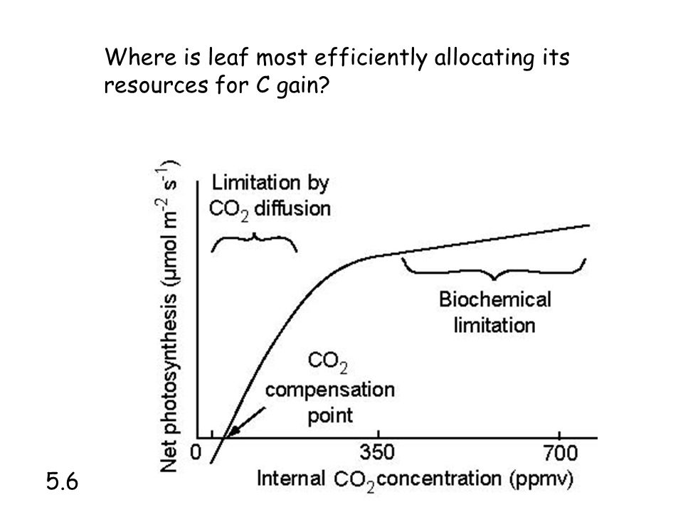 Where is leaf most efficiently allocating its resources for C gain?