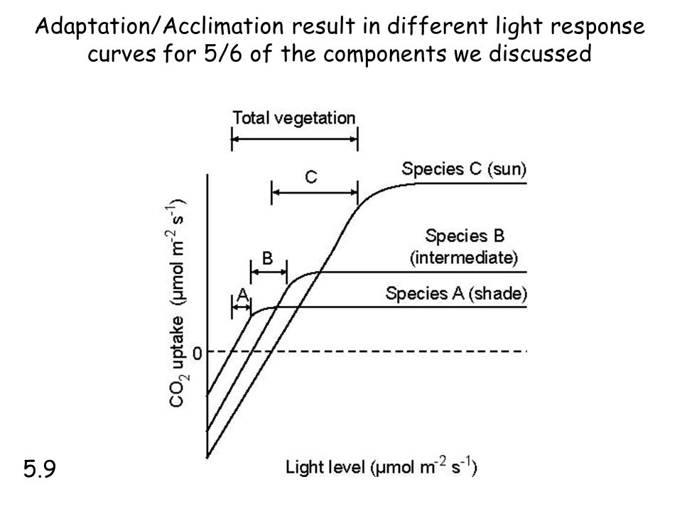 Adaptation/Acclimation result in different light response curves for 5/6 of the components we discussed 5.9