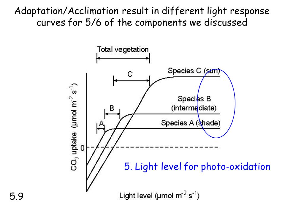 Adaptation/Acclimation result in different light response curves for 5/6 of the components we discussed 5.