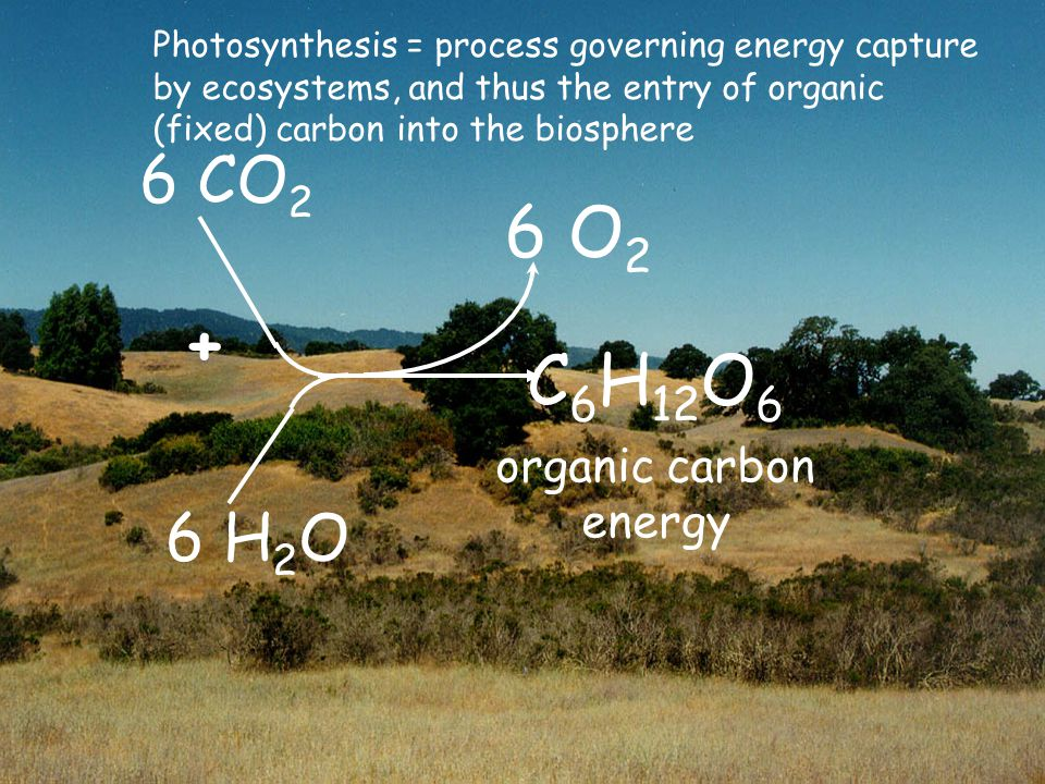 6 CO 2 C 6 H 12 O 6 organic carbon energy 6 H 2 O + 6 O 2 Photosynthesis = process governing energy capture by ecosystems, and thus the entry of organic (fixed) carbon into the biosphere