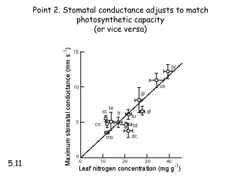 Point 2. Stomatal conductance adjusts to match photosynthetic capacity (or vice versa) 5.11