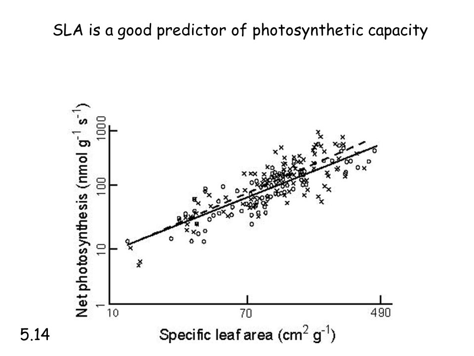 SLA is a good predictor of photosynthetic capacity 5.14