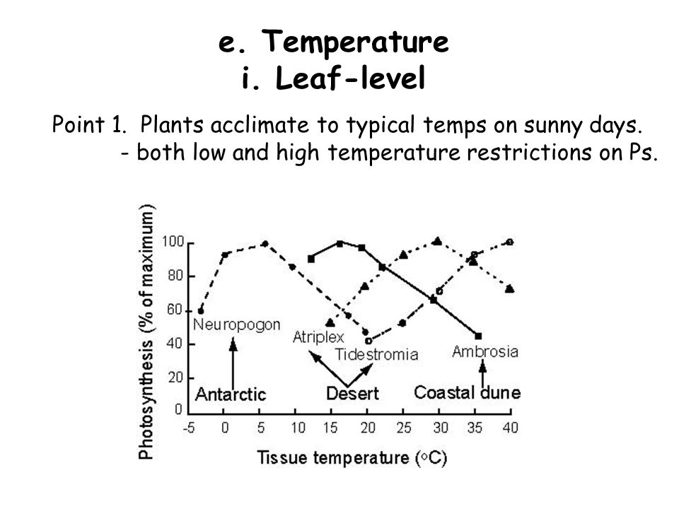 e.Temperature i. Leaf-level Point 1. Plants acclimate to typical temps on sunny days.
