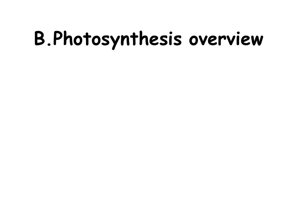 B.Photosynthesis overview