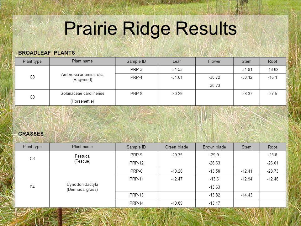 Prairie Ridge Results BROADLEAF PLANTS Plant type Plant name Sample IDLeafFlowerStemRoot C3 Ambrosia artemisiifolia (Ragweed) PRP-3-31.53 -31.91-18.82 PRP-4-31.61-30.72-30.12-16.1 -30.73 C3 Solanaceae carolinense PRP-8-30.29 -28.37-27.5 (Horsenettle) GRASSES Plant typePlant name Sample IDGreen bladeBrown bladeStemRoot C3 Festuca (Fescue) PRP-9-29.35-29.9 -25.6 PRP-12 -28.63 -26.01 C4 Cynodon dactyla (Bermuda grass) PRP-6-13.28-13.58-12.41-28.73 PRP-11-12.47-13.6-12.94-12.48 -13.63 PRP-13 -13.82-14.43 PRP-14-13.89-13.17