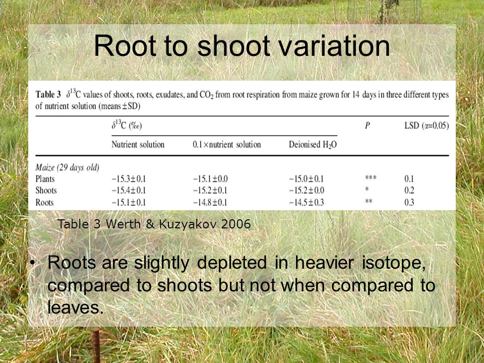 Differences in Prairie Ridge Data Differences between different plant groups Perhaps different compound abundances in Cynodon dactlyon roots than in Zea maize roots Sample preparation flawed (Bermuda grass root samples?!?)