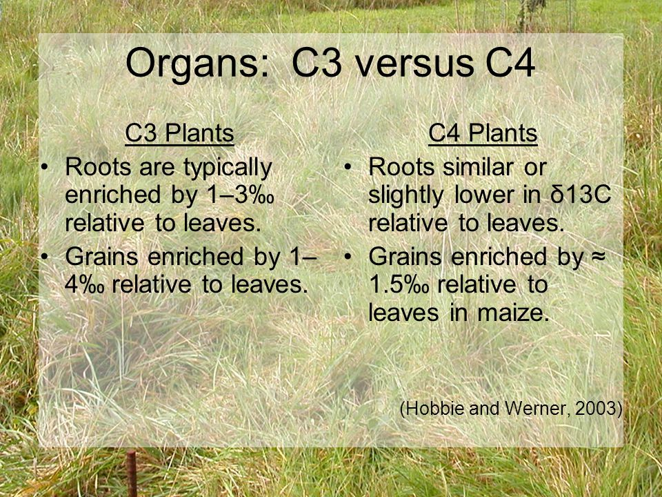 Organs: C3 versus C4 C3 Plants Roots are typically enriched by 1–3‰ relative to leaves.