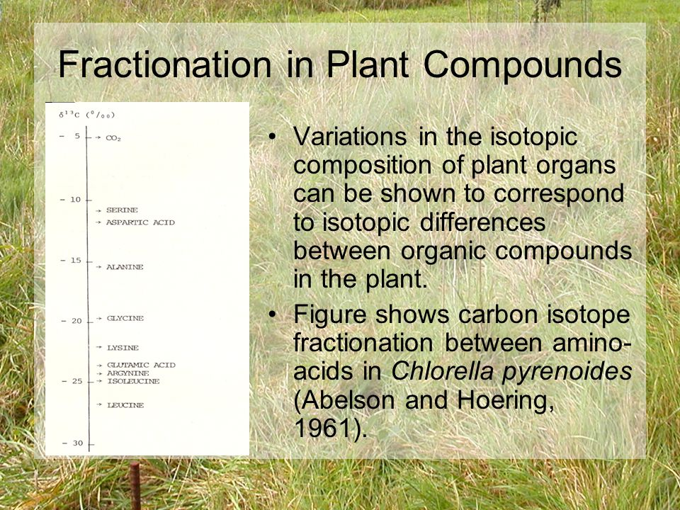 Fractionation in Plant Compounds Hobbie & Werner 2004 –Suggest early isotopic fractionation in derivatives of photosynthesis lead to large differences later on.