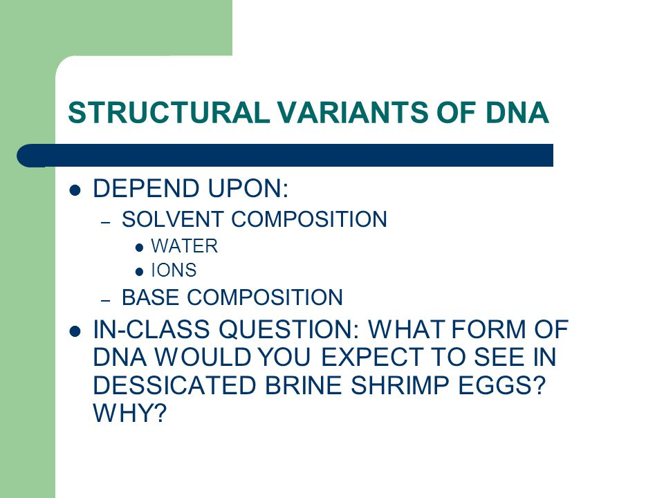 STRUCTURAL VARIANTS OF DNA DEPEND UPON: – SOLVENT COMPOSITION WATER IONS – BASE COMPOSITION IN-CLASS QUESTION: WHAT FORM OF DNA WOULD YOU EXPECT TO SEE IN DESSICATED BRINE SHRIMP EGGS.