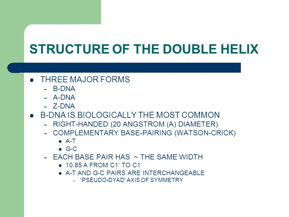 STRUCTURE OF THE DOUBLE HELIX THREE MAJOR FORMS – B-DNA – A-DNA – Z-DNA B-DNA IS BIOLOGICALLY THE MOST COMMON – RIGHT-HANDED (20 ANGSTROM (A) DIAMETER) – COMPLEMENTARY BASE-PAIRING (WATSON-CRICK) A-T G-C – EACH BASE PAIR HAS ~ THE SAME WIDTH 10.85 A FROM C1' TO C1' A-T AND G-C PAIRS ARE INTERCHANGEABLE – PSEUDO-DYAD AXIS OF SYMMETRY