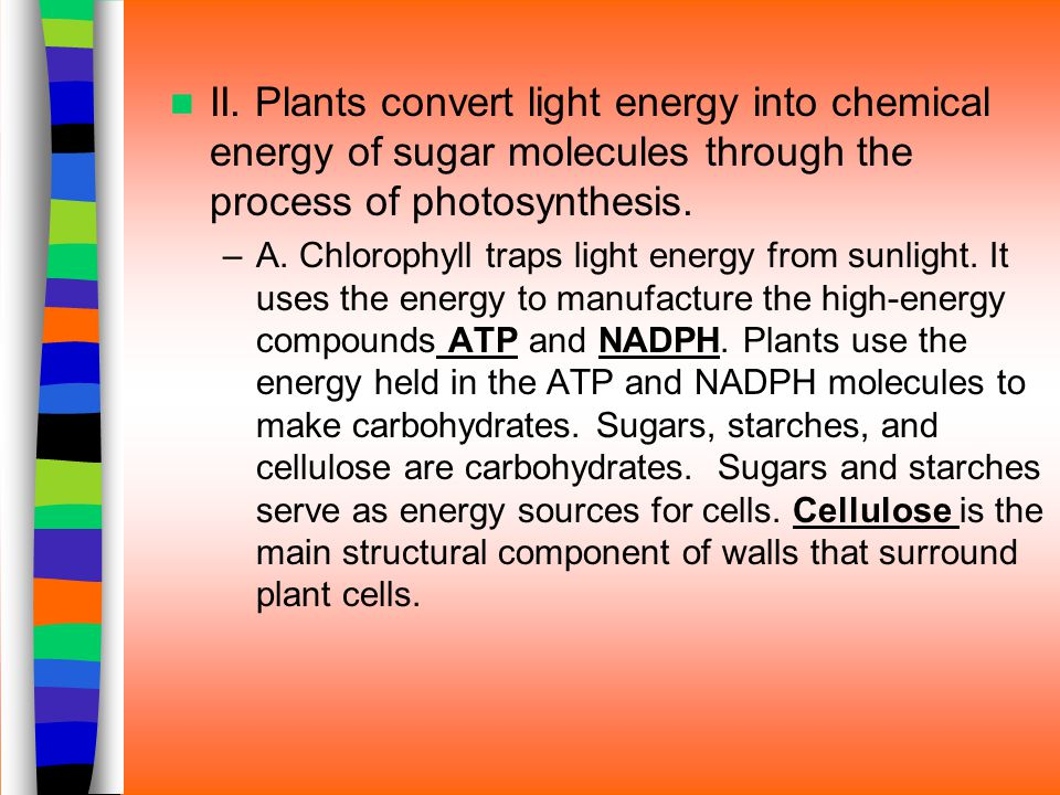 II. Plants convert light energy into chemical energy of sugar molecules through the process of photosynthesis. –A. Chlorophyll traps light energy from