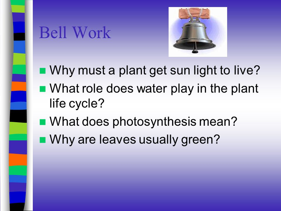 Bell Work Why must a plant get sun light to live.