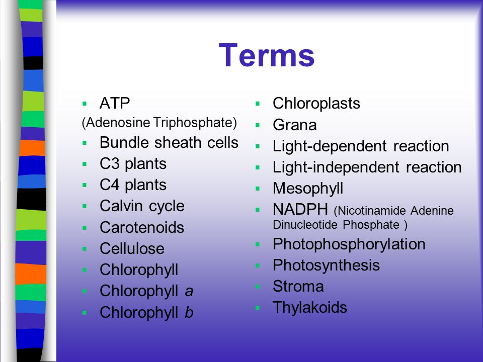 Terms  ATP (Adenosine Triphosphate)  Bundle sheath cells  C3 plants  C4 plants  Calvin cycle  Carotenoids  Cellulose  Chlorophyll  Chlorophyll a  Chlorophyll b  Chloroplasts  Grana  Light-dependent reaction  Light-independent reaction  Mesophyll  NADPH (Nicotinamide Adenine Dinucleotide Phosphate )  Photophosphorylation  Photosynthesis  Stroma  Thylakoids