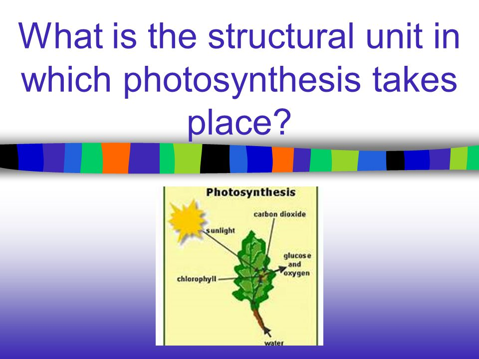 What is the structural unit in which photosynthesis takes place