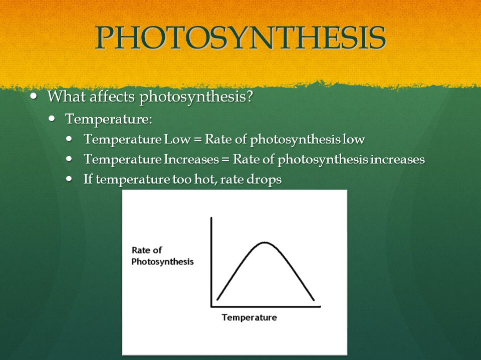 PHOTOSYNTHESIS What affects photosynthesis. What affects photosynthesis.