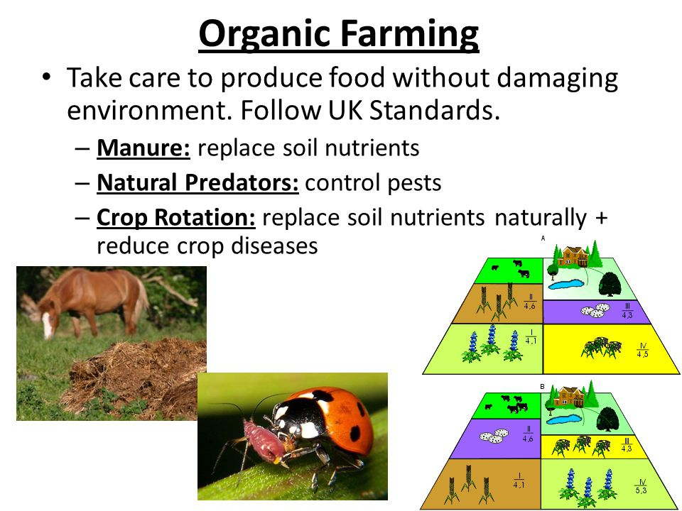 Organic Farming Take care to produce food without damaging environment. Follow UK Standards. – Manure: replace soil nutrients – Natural Predators: con