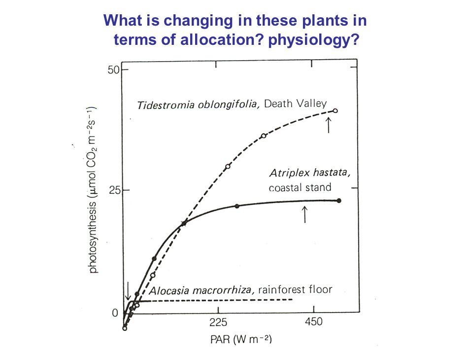 What is changing in these plants in terms of allocation? physiology?