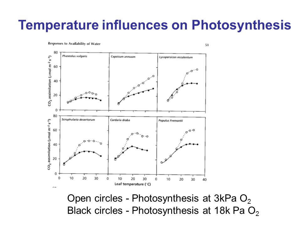 Temperature influences on Photosynthesis Open circles - Photosynthesis at 3kPa O 2 Black circles - Photosynthesis at 18k Pa O 2