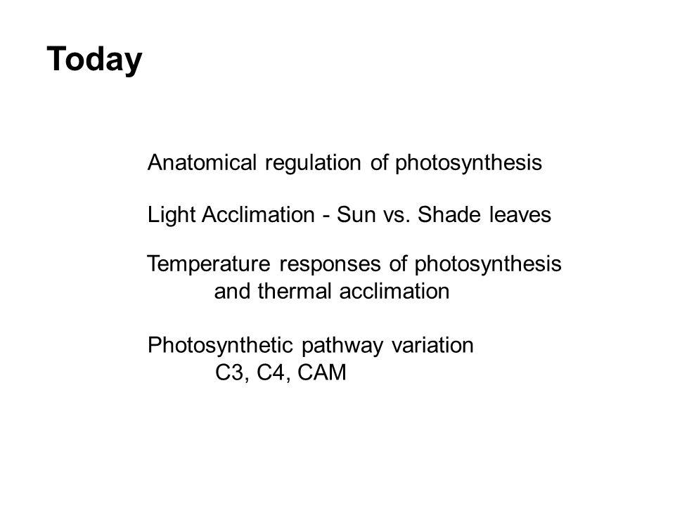 Today Anatomical regulation of photosynthesis Light Acclimation - Sun vs.