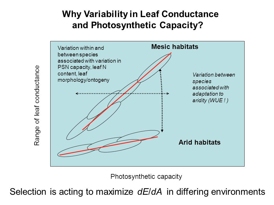 Photosynthetic capacity Range of leaf conductance Arid habitats Mesic habitats Variation between species associated with adaptation to aridity (WUE .