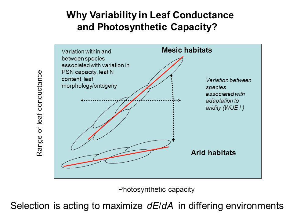 Photosynthetic capacity Range of leaf conductance Arid habitats Mesic habitats Variation between species associated with adaptation to aridity (WUE .