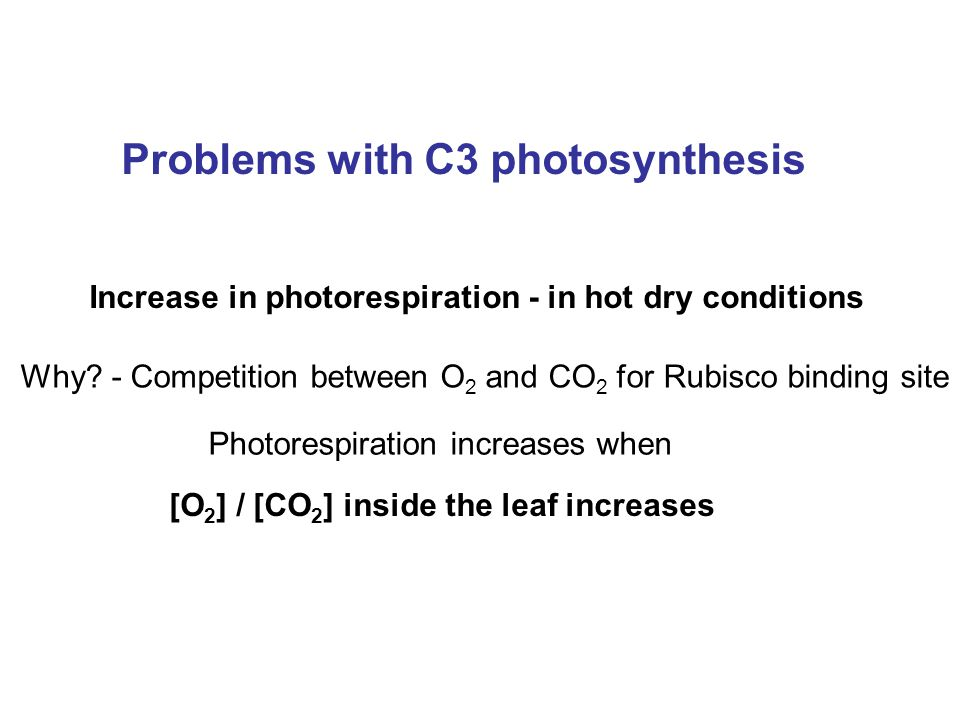 Problems with C3 photosynthesis Increase in photorespiration - in hot dry conditions Why.
