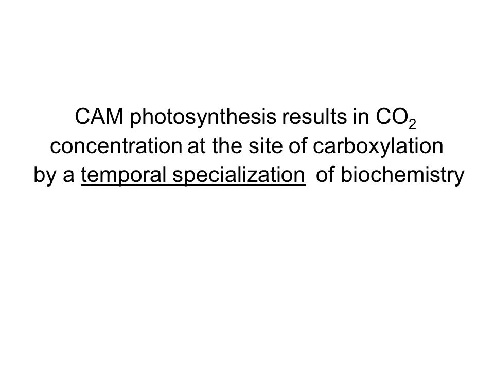 CAM photosynthesis results in CO 2 concentration at the site of carboxylation by a temporal specialization of biochemistry