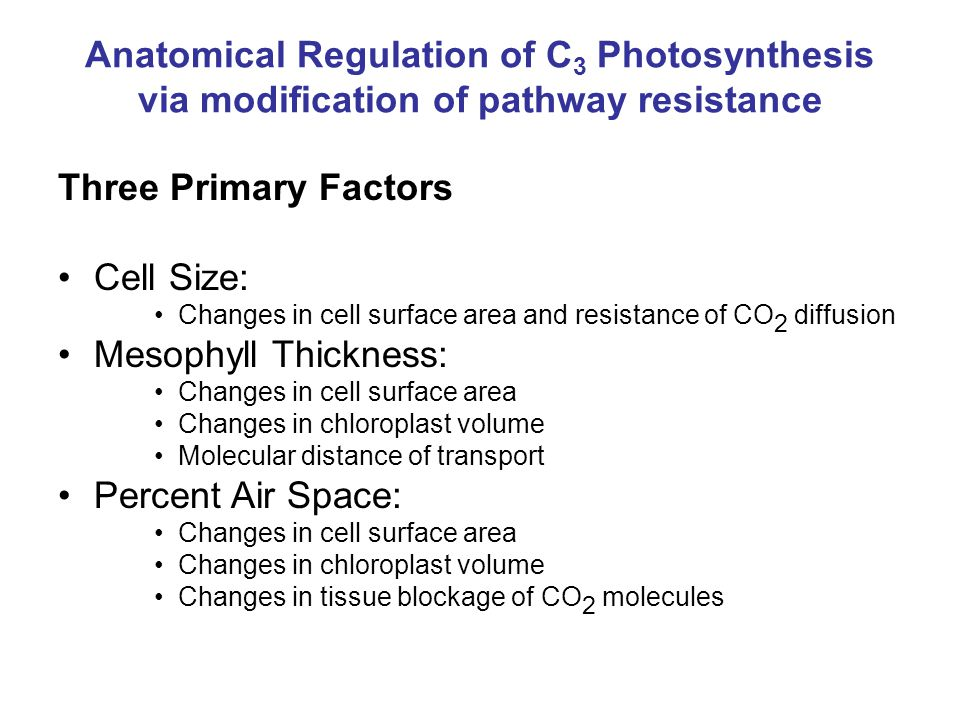 Anatomical Regulation of C 3 Photosynthesis via modification of pathway resistance Three Primary Factors Cell Size: Changes in cell surface area and resistance of CO 2 diffusion Mesophyll Thickness: Changes in cell surface area Changes in chloroplast volume Molecular distance of transport Percent Air Space: Changes in cell surface area Changes in chloroplast volume Changes in tissue blockage of CO 2 molecules